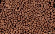 Кофе свежей обжарки (свежеобжаренный кофе)