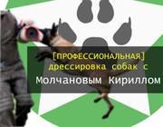 Профессиональная дрессировка собак в Николаеве