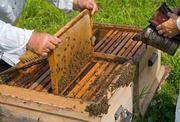 Продам пчёлы с ульем