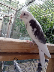 Попугаи различных пород,  опт и розница