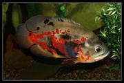Выставка аквариумистики