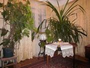 Продам комнатные растения.Пальмы финиковы и монстеры высотой более мет